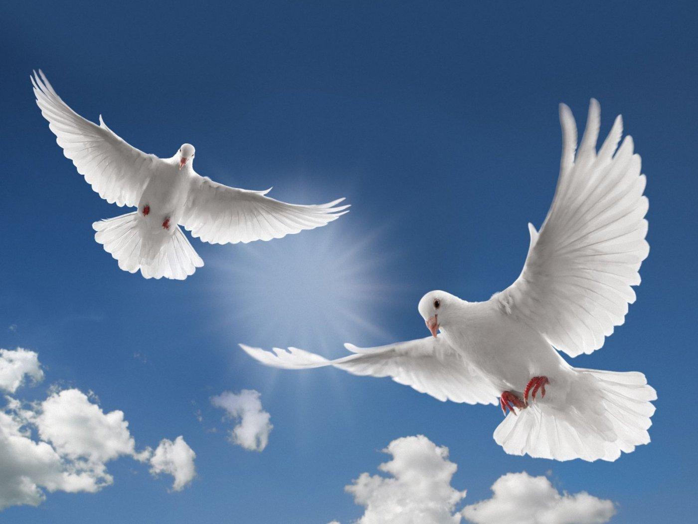 Fancy-Pictures-Of-White-Doves-Flying.jpg